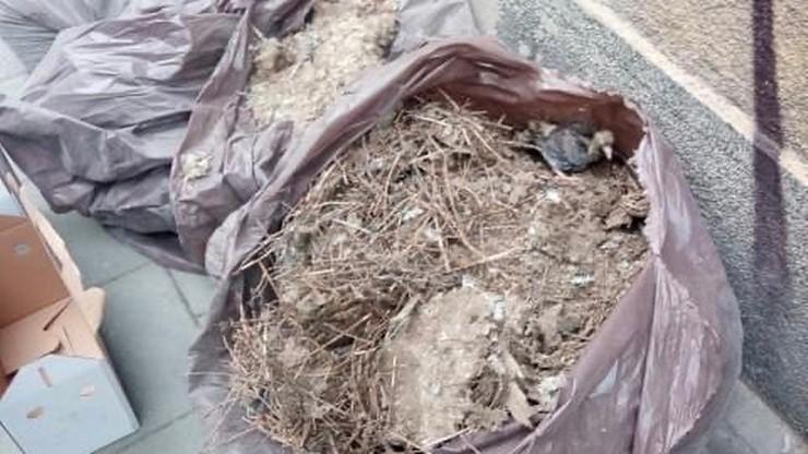 Ktoś wyrzucił gołębie na śmieci. W workach były pisklęta